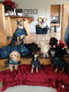 christmasdogs2